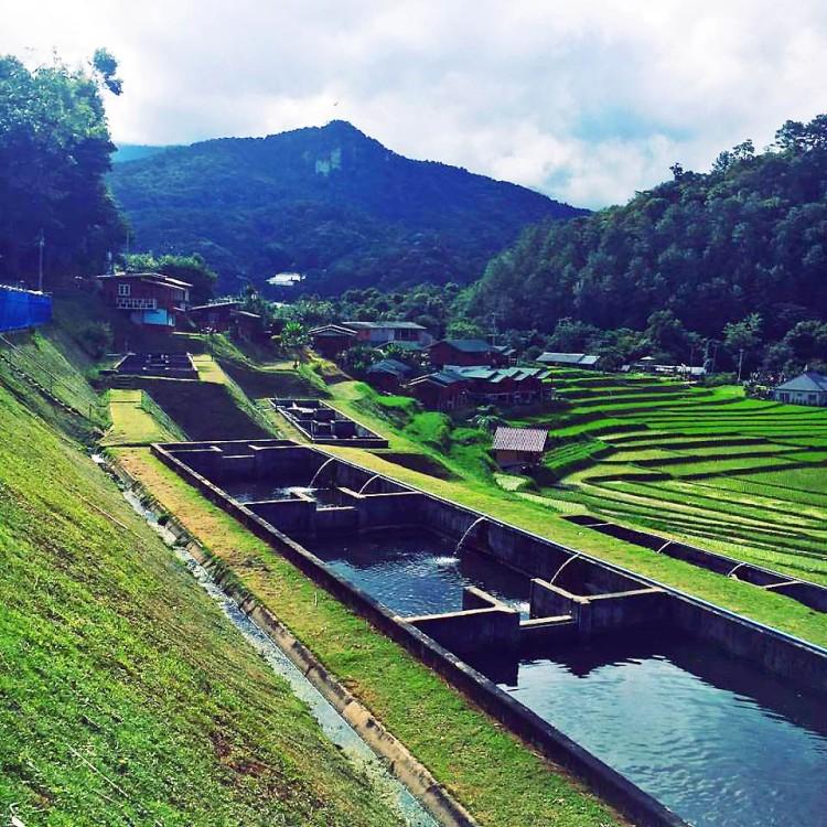 fish farm in karen village