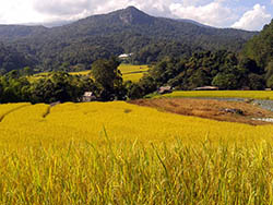 Rice field Bungalow view at Doi Inthanon National Park Thailand