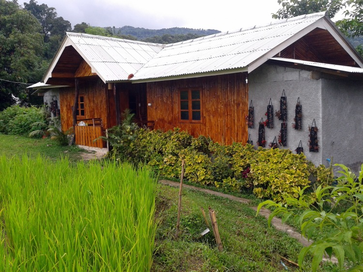 Rice field view bungalow at Doi Inthanon National Park Thailand