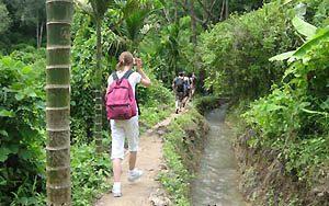 Trekking Doi Inthanon National Park Thailand