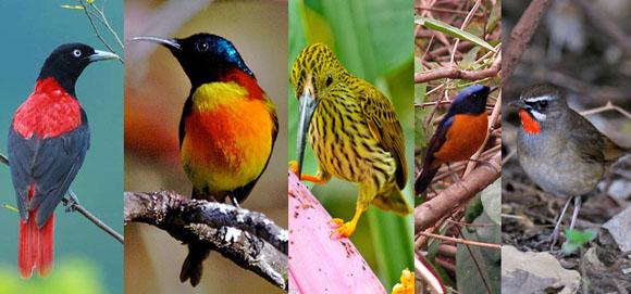 Birds of Doi Inthanon National Park Thailand