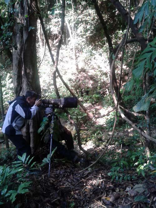 Bird Photography at Doi Inthanon