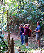Birding Doi INthanon National Park Thailand
