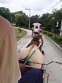 Riding Horse Buggy at Wiang Kum Kam Chiang Mai Thailand